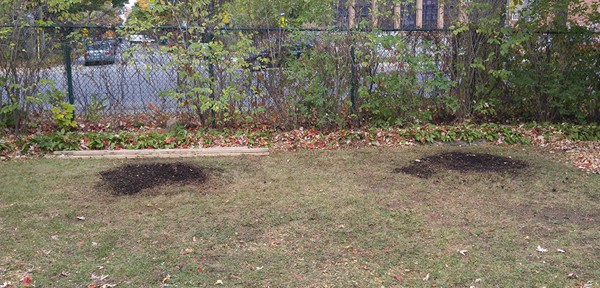 Tree stump removal in Montreal and Laval