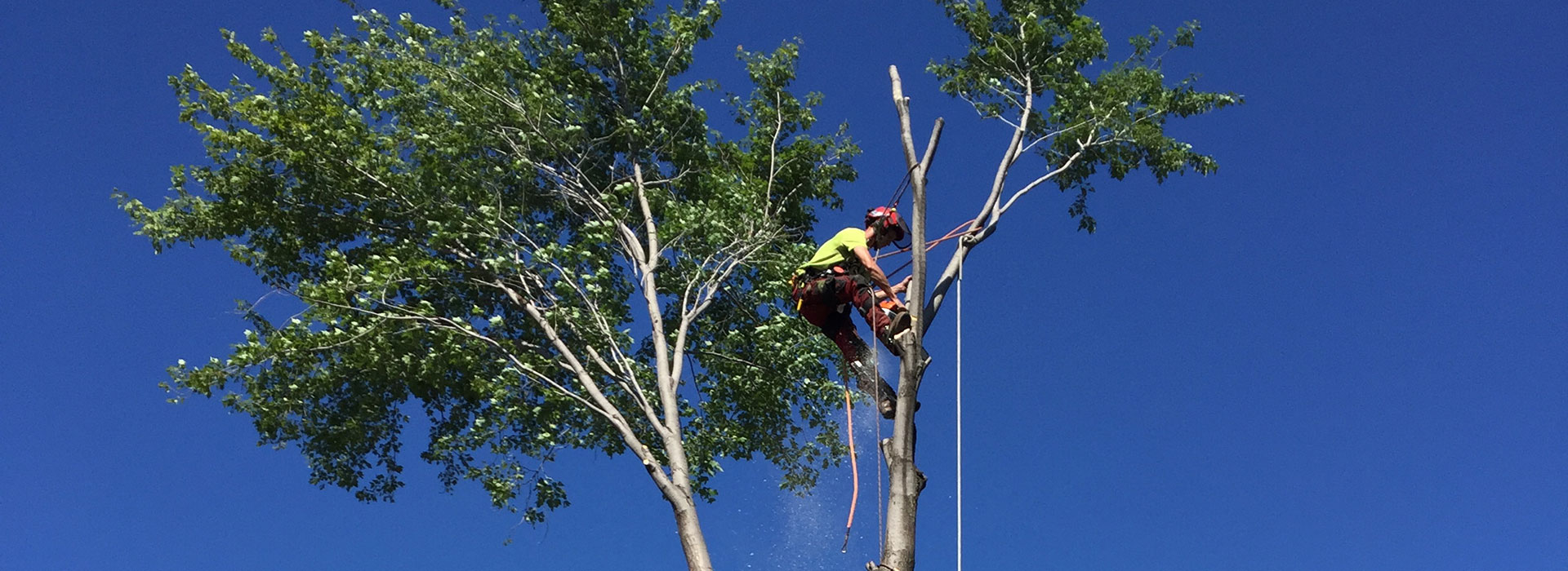 Tree pruning in Montreal