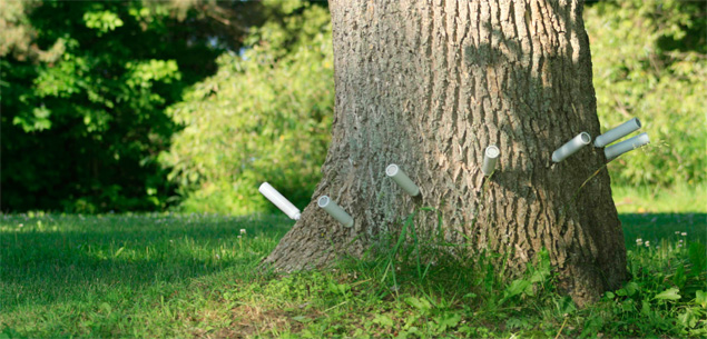 Treatment against emerald ash borer at Treeazin in Montreal