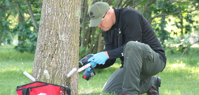 Treatment recognized with Treeazin against emerald ash borer in Montreal