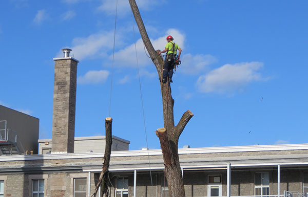 Tree cutting, felling, service in Montreal