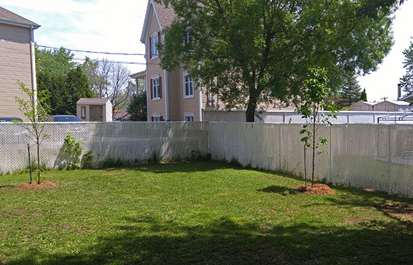 Tree and cedar planting service in Montreal